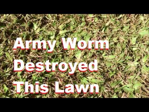 Albin na may gamot mula sa mga worm