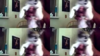 Chubb Rock Kittens