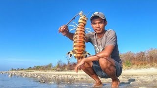 Gigantic Mantis Shrimp of madura Remote Island Catch Them With Simple bamboo trap