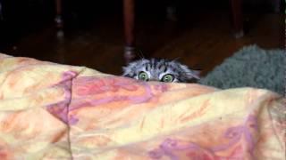 Смотреть онлайн Снова забавный кот