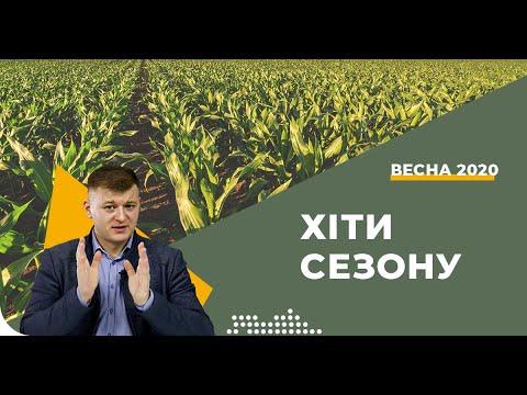 Какие гибриды кукурузы купить в 2020 году?