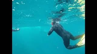 SWIMMING WITH HUMPBACK WHALES AT NINGALOO REEF