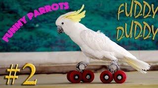 Подборка Приколов #2 Выпуск. Говорящие Попугаи. Talking Parrots