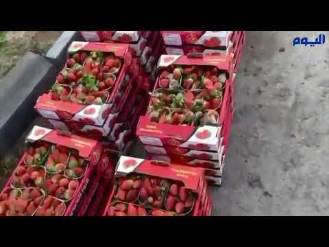 فيديو .. ضبط نصف طن فراولة فاسدة قبل توزيعها بسوق الدمام