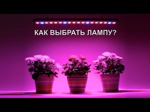 Как выбрать лампу для выращивания растений в зимнее время? Досветка цветов на стеллаже и подоконнике