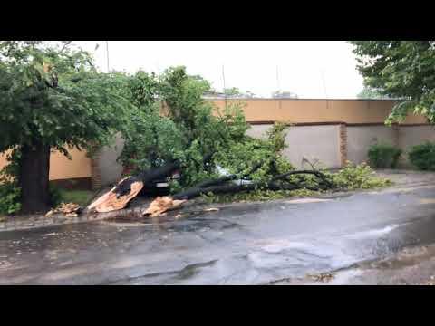 Wideo: Lipa po burzy spadła na auta