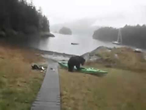 Bear please stop (full video)