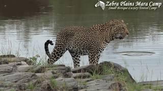 Zebra Plains Mara Camp Promotional Video