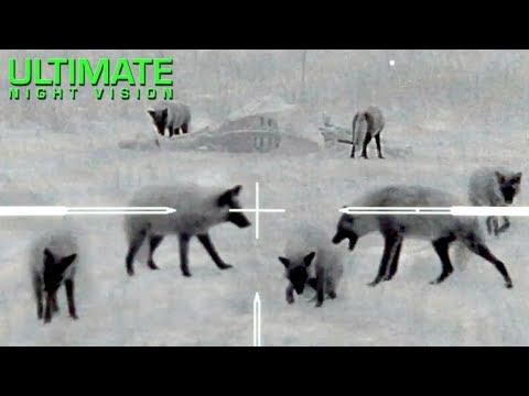 Viziunea cataractei 8