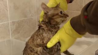 How to Wash a Cat from Hell , Bath time for Ellie