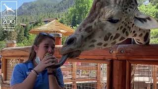 "World Giraffe Day: Lettuce Challenge with ""Big Daddy"" Khalid"