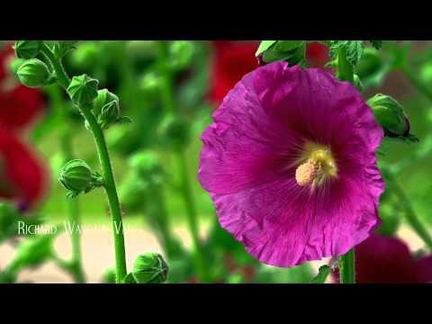 RWV:  2015 Summer Flowers - Video using Sony PXW-X70