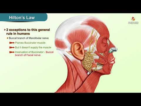 Csípőízület coxarthrosis vagy arthrosis