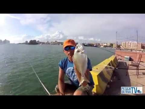 Le notizie da pescare da serbatoi di area Di Mosca