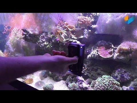 Flipper Magnet Scheibenreiniger Aquariumcleaner Klingenmagnet | Review | Meerwasser Live TV
