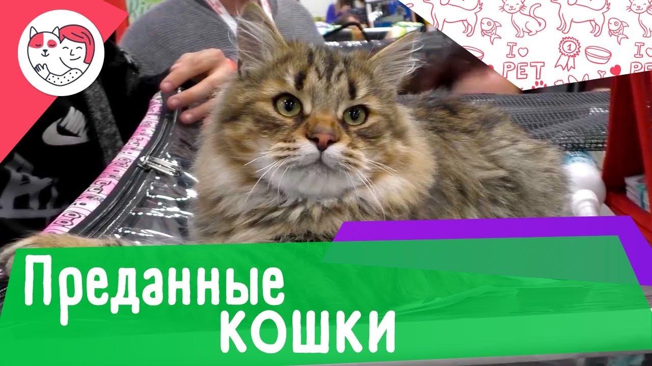 8 самых преданных пород кошек