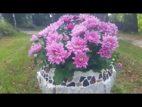 Blumenschale Upcycling mit Beton und Mosaiksteinen