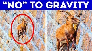 17 Awesome Animals That Can Do Impossible Things