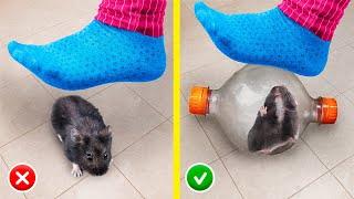 13 Truques E Artesanatos Criativos Para Hamsters!