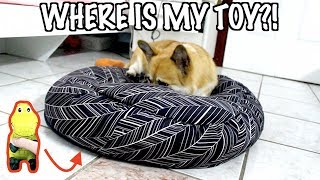 HIDING MY DOGS FAVOURITE TOY! HER REACTION!