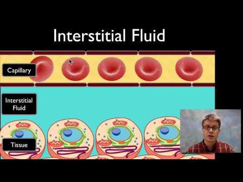 Dans lanalyse biochimique du sucre dans le sang est désigné
