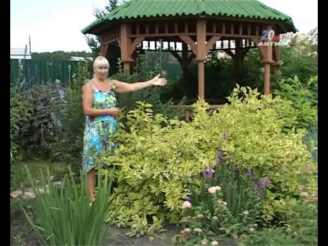 Как вырастить на даче красивые лилии