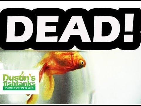 Aquarium Fish DEAD Top 10 FASTEST Ways to KILL Your AQUARIUM FISH