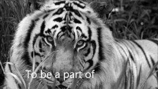 Jonsi - Gathering Stories [We Bought a Zoo] w/ Lyrics