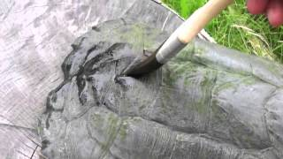 How to preserve a  snapping turtle shell