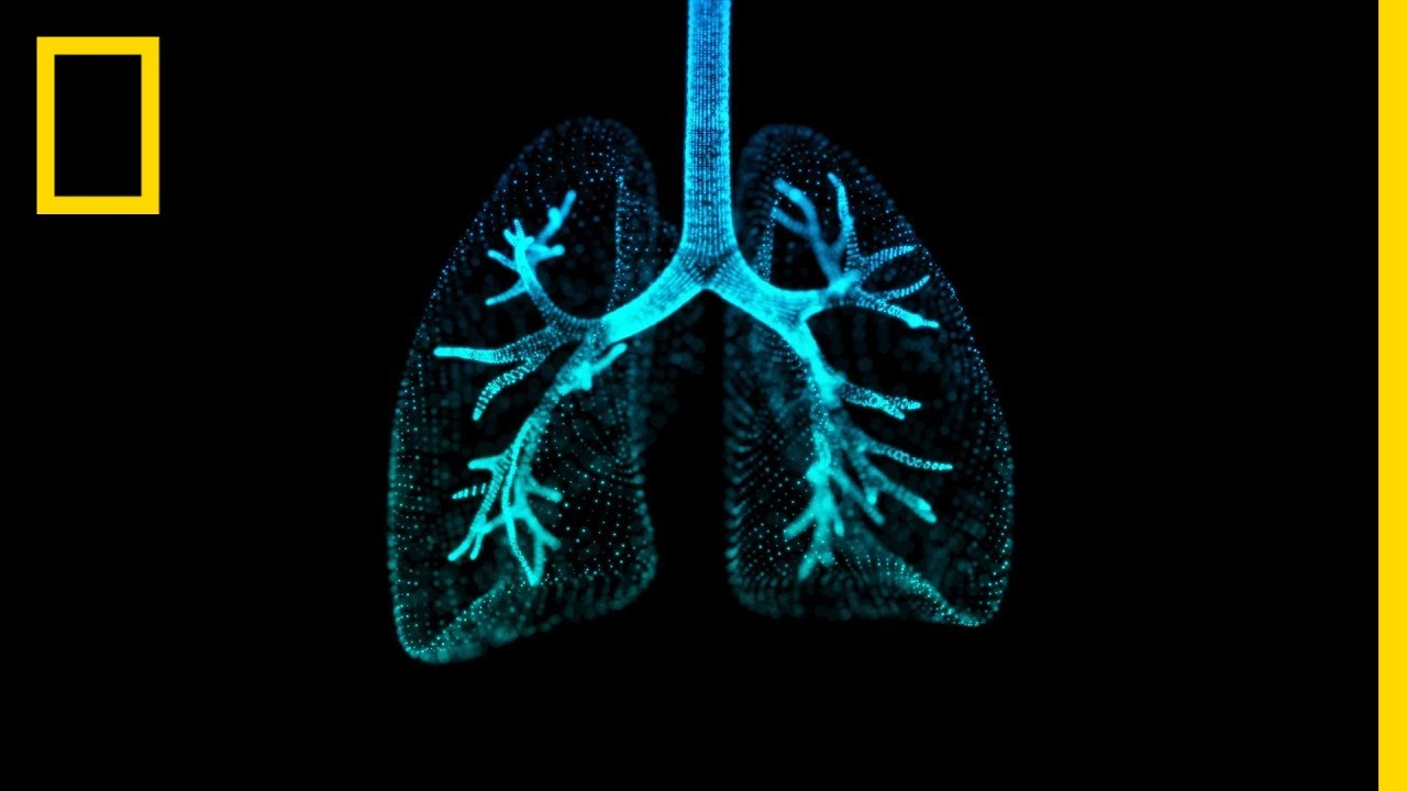 Lungs 101 | National Geographic thumbnail