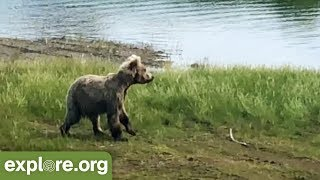 Bear Cam Update: Raw footage from Katmai!