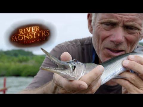 Hornfisken -.en menneskedræber?