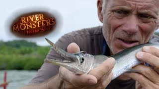 Catching A Needlefish - River Monsters