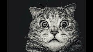 Смешные Коты и Собаки 2019 - Лучшие Приколы с Животными №109