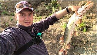 Рыбалка на щуку летом с берега