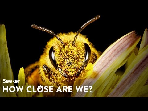 How Close Are We to Saving the Bees?