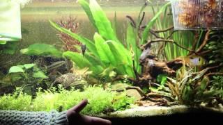 1# Akwarystyka Rodzinna - Akwarium 112l nasze rybki.