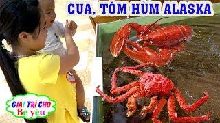BÉ XEM CUA TÔM HÙM ALASKA - Go to look at the crab, alaska lobster-Giai tri cho Be yeu