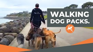WATCH us walk packs of dogs on lead & off lead - THE HIGHLIGHTS.
