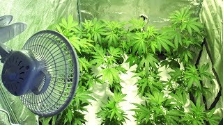 Great News For Medical Marijuana Growers thumbnail