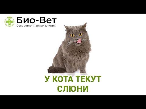 У кота текут слюни. Ветеринарная клиника Био-Вет.