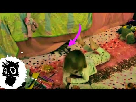 5 РЕАЛЬНЫХ БАБКА-ЁЖЕК СНЯТЫХ НА КАМЕРУ [Черный кот]