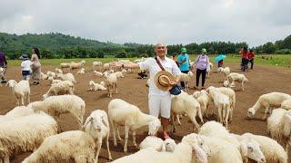 Đồng Cừu Suối Nghệ, bối cảnh thơ mộng cho các nhà làm phim và chụp ảnh cuới