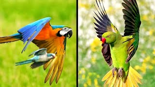Funny Parrots Videos Compilation | Cute Moment Of Animals - Cutest Parrots Funny Videos 2020