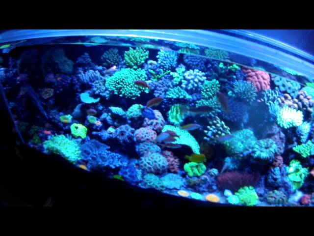 A MUST SEE for reefers! Tour of Mark Willis's amazing reef tank!
