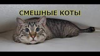 ПРИКОЛЫ С КОТАМИ — Смешные коты и кошки 2018 🐈 КОТЫ ПРИКОЛЫ)))