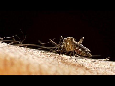 Εξάπλωση του ιού Ζίκα σε Αφρική και Ασία φοβάται ο ΠΟΥ