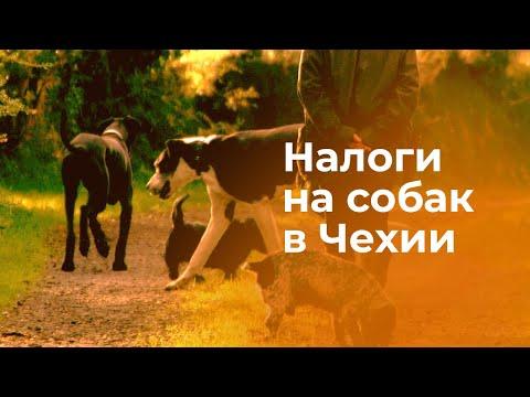 Налог на собак в Чехии