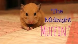 """The Midnight Muffin"" (cute clips of my lil' ham)"