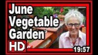 June Vegetable Garden - Wisconsin Garden Video Blog 835